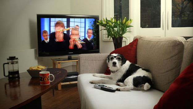 3dtv-for-the-dogs