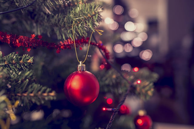 what should you do with your christmas tree  l