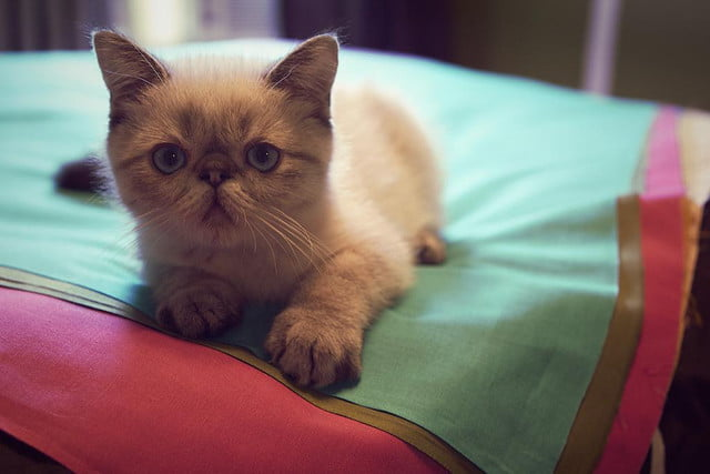 grumpy cat may be the best on internet today but these kitties are close contenders  e b