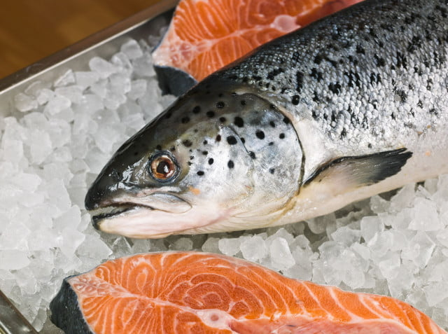 genetically modfied salmon gains approval fda  l