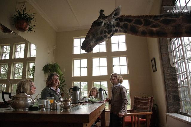 bizarre airbnb rentals that are almost too weird to believe giraffe manor kenya