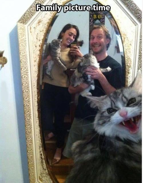 bad cat selfie 3