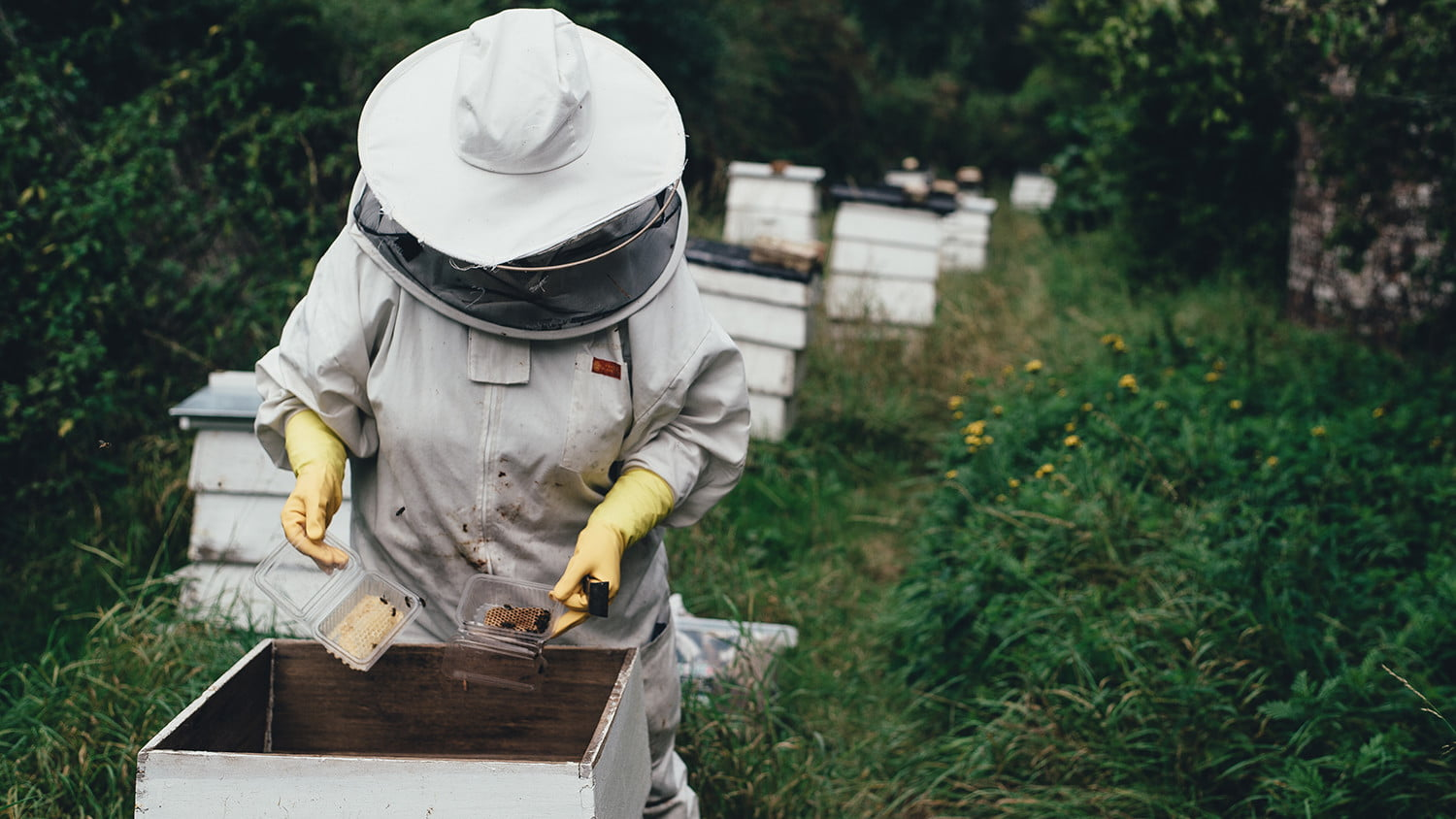 tesla model s and x consumer reports ratings lowered beekeeper ff feat