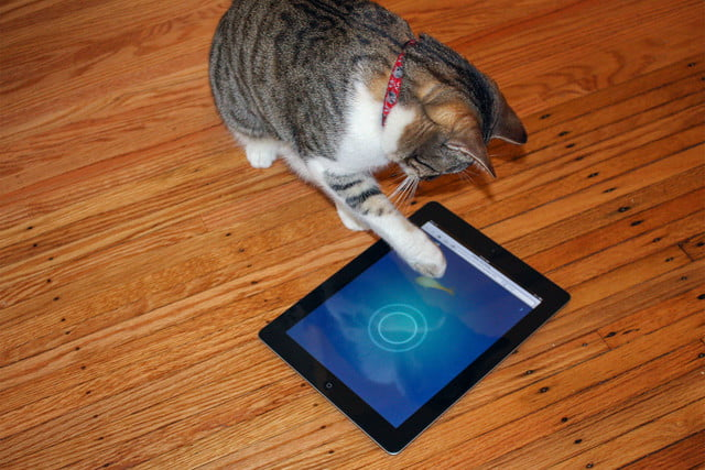 best apps for cats cat fishing