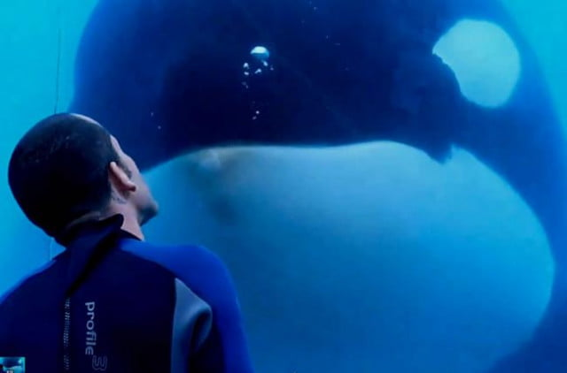 Blackfish Photo