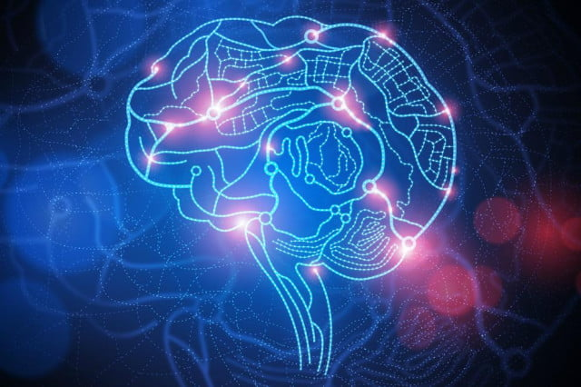 monkey rat brains connected to form brainet brain