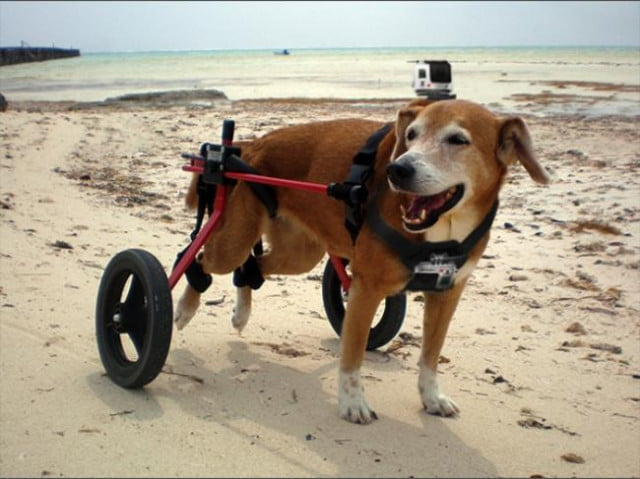 canine-film-stabilization-dolly