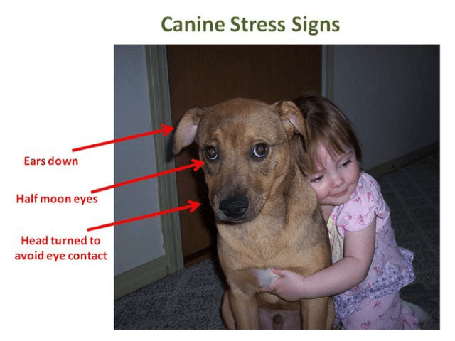 dogs hate hugs canine stress