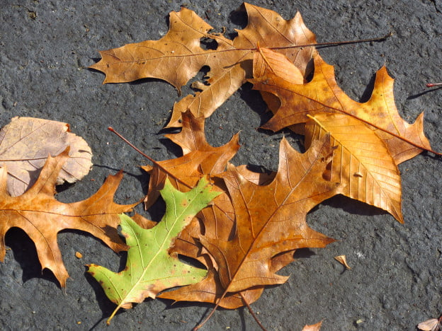 canon-powershot-elph-510-hs-review-leaves-sample-picture