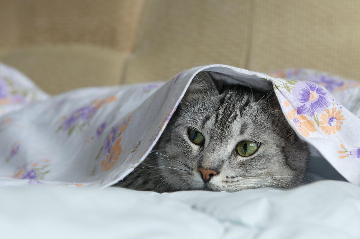Can Cats Get Sick From Bed Bugs