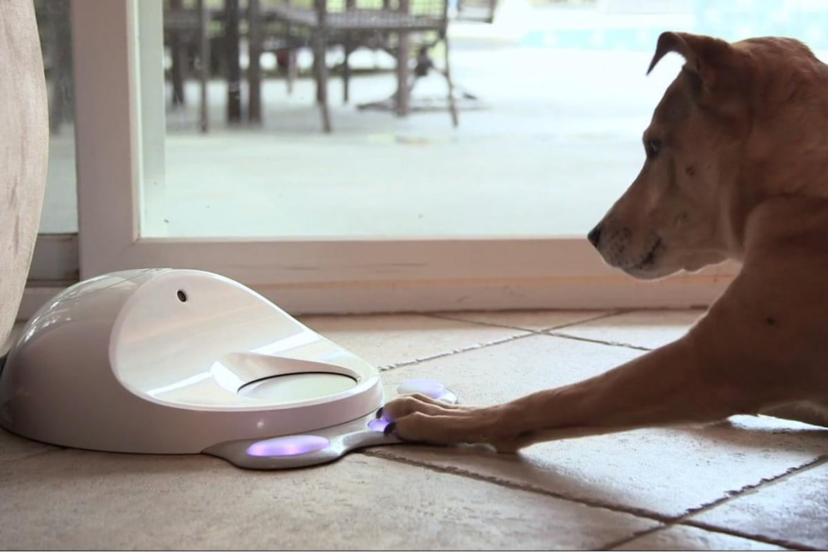 cleverpet smart device rewards dogs solving puzzles theyre alone