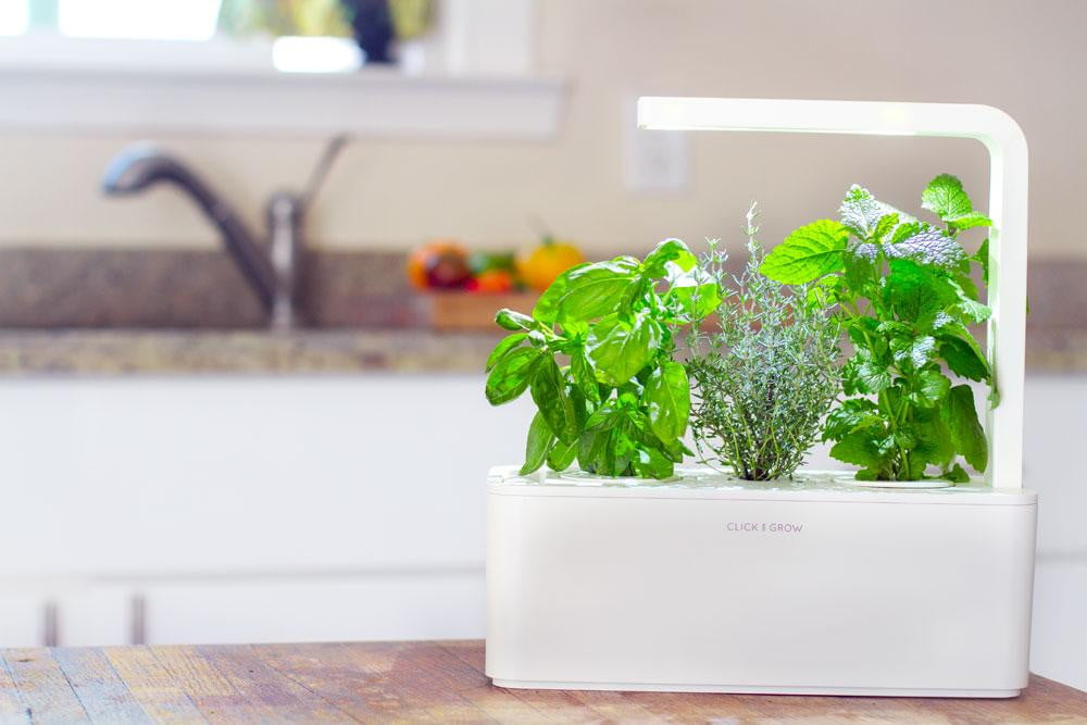 new click grow smart herb garden launches worldwide today
