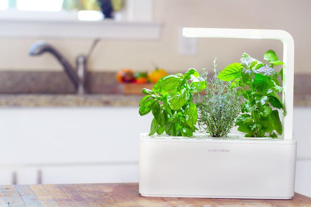 new click grow smart herb garden launches worldwide today  amp