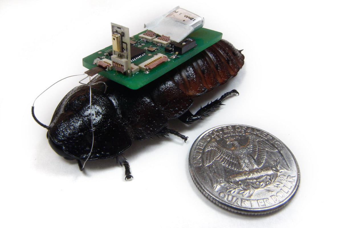 team of scientists develop cyborg cockroaches to detect disaster victims cockroach cyborgs mem