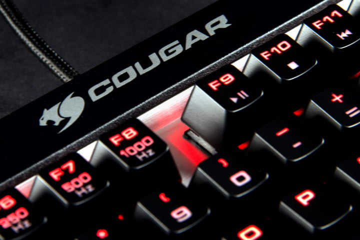 cougar attack x  review box