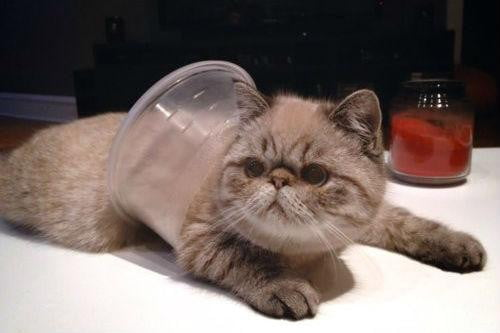 grumpy cat may be the best on internet today but these kitties are close contenders cup