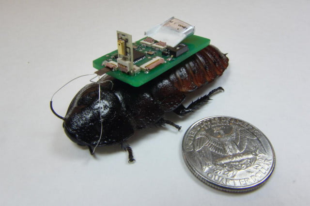 cyborg cockroaches can help find rescue disaster victims buried rubble cockroach