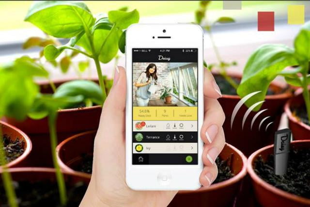 use this device and stop killing your plants you mur diddly urdler daisy sensor smart for