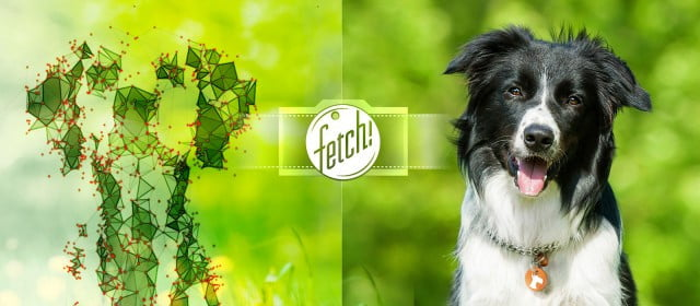 fetch nueva app microsoft raza perro dmesh illustration  px