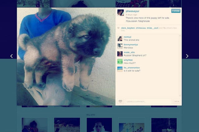 instagram and puppy mills dog for sale final