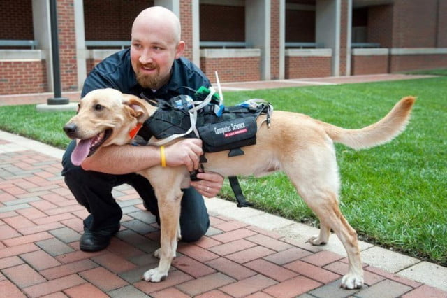 high tech harness lets humans dogs communicate dog