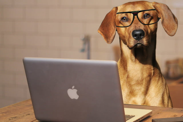 will technology let you talk to your dog in the future using laptop computer