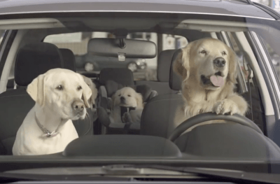 protecting dogs in hot cars what is your states law