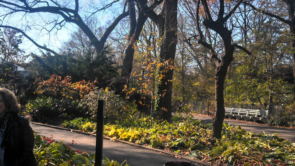 Droid RAZR MAXX HD review camera sample outdoor park android smartphone