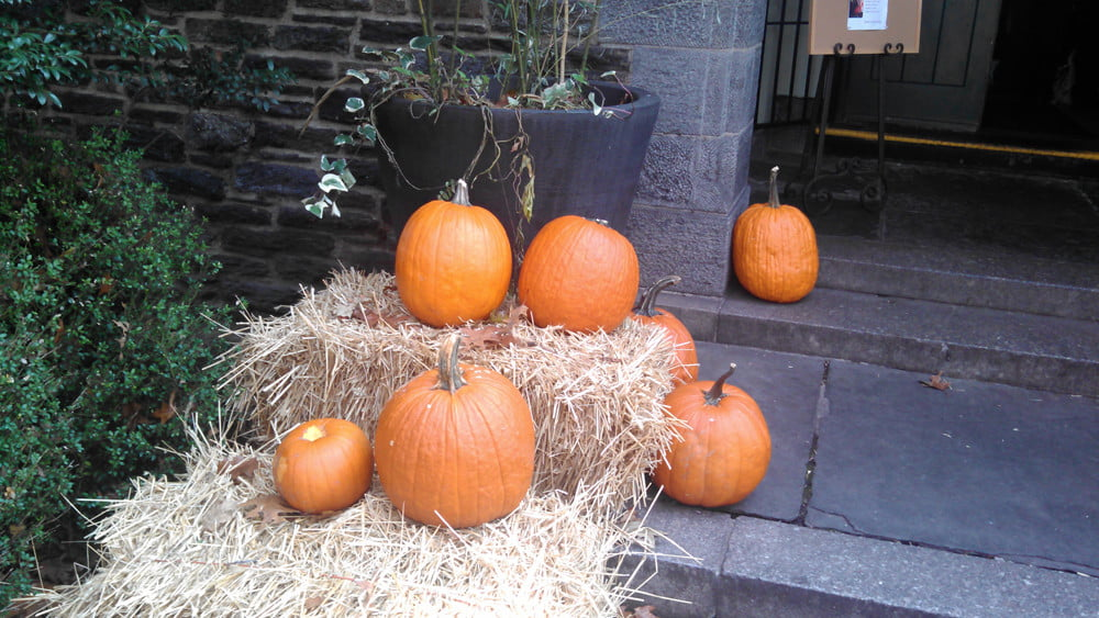 Droid RAZR MAXX HD review camera sample pumpkins motorola android