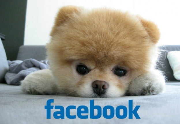 facebook-boo-dog
