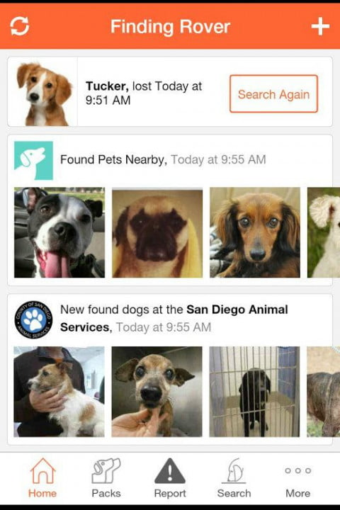 finding rover facial recognition app  android feed