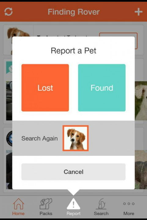 finding rover facial recognition app report pet