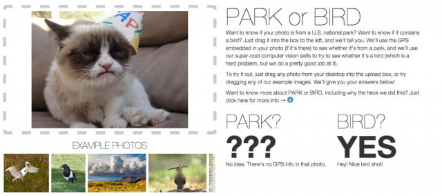 It's not perfect, as this image upload shows. Flickr couldn't determine where it was shot due to missing GPS info, but it also thought this famous Internet feline is a bird.