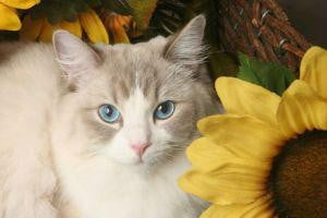 grumpy cat may be the best on internet today but these kitties are close contenders flowers