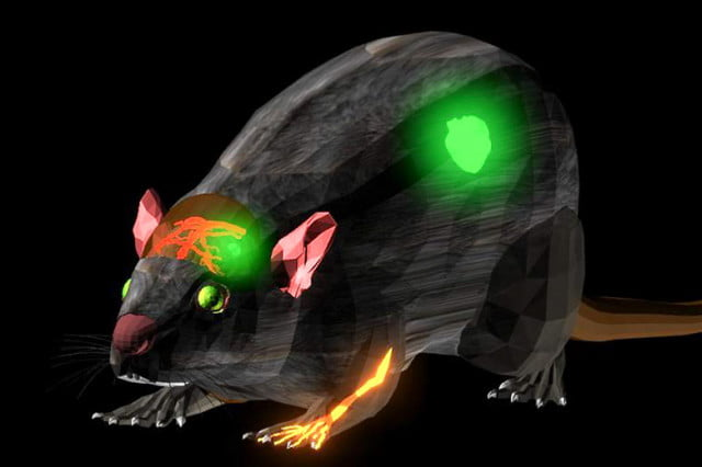 stanford develops fluorescent dye see beneath skin scientists developed a that lets doctors the