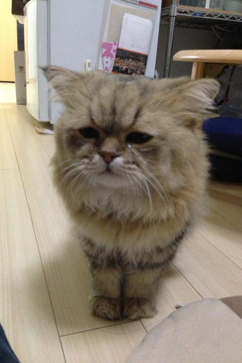 grumpy cat may be the best on internet today but these kitties are close contenders foo chan
