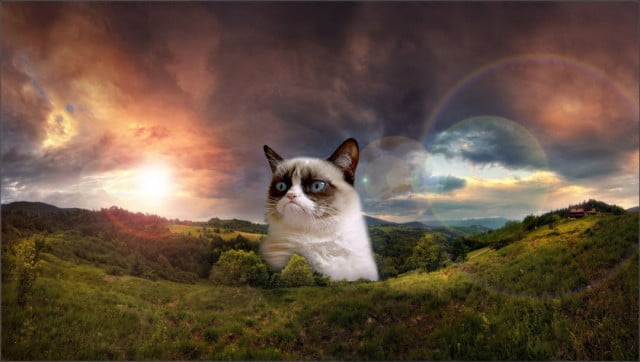 survival felines  reasons grumpy cat lasted long minutes funny images hd wallpaper x