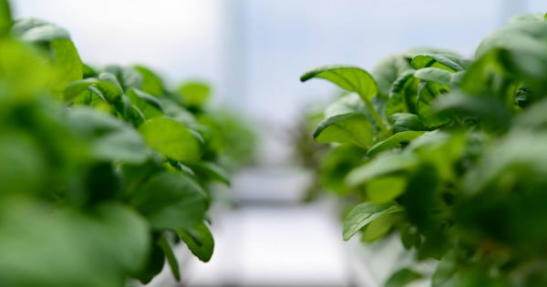 Grove Labs Launches Indoor Garden For Homegrown Vegetables