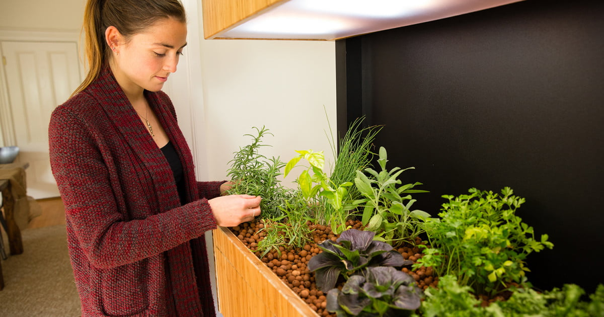 Grove ecosystem launches a kickstarter for its indoor for Indoor gardening trends