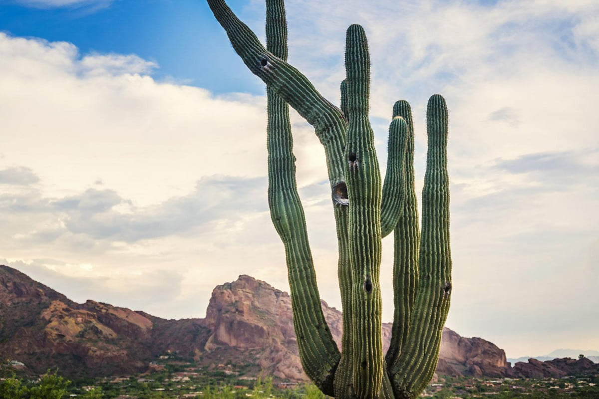 cactus cameras alarm residents of arizona town hidden