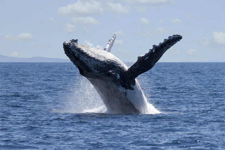 biomimicry examples humpback whale