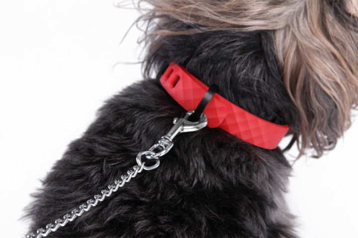 kyon smart pet tracker regular dog collar is the world s smartest  and it looks just like a