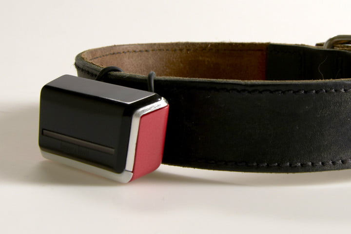 jagger lewis smart dog collar news device