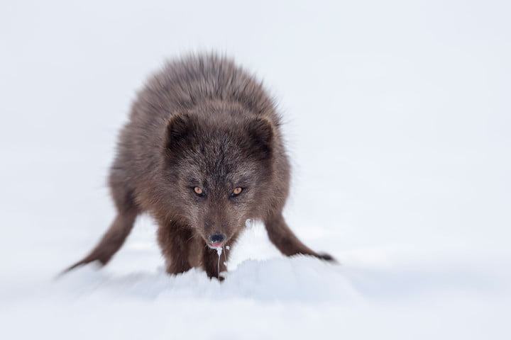 how to photograph the arctic with joshua holko interview mg  edit