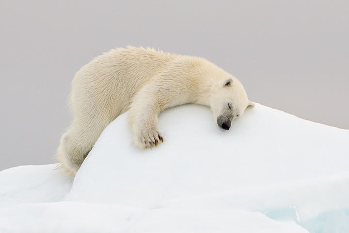how to photograph the arctic with joshua holko interview polarbear