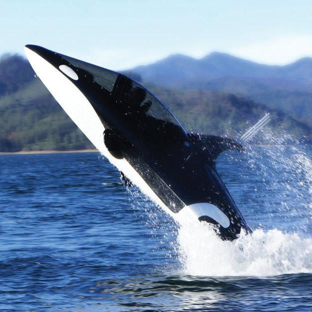 Killer-Whale-Submarine-is-your-ticket-to-awesome