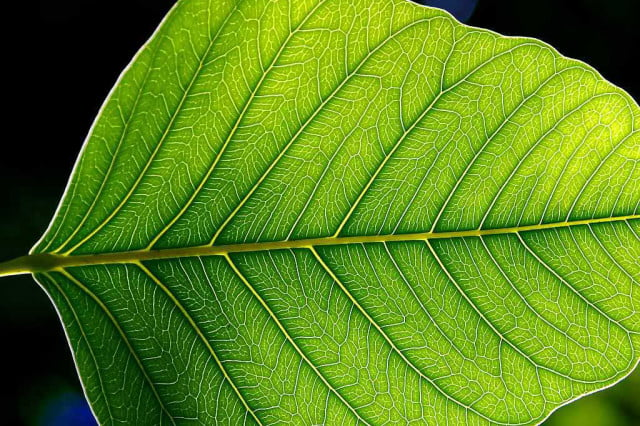 artificial photosynthesis leaf close up