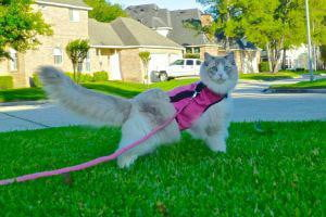 grumpy cat may be the best on internet today but these kitties are close contenders leash