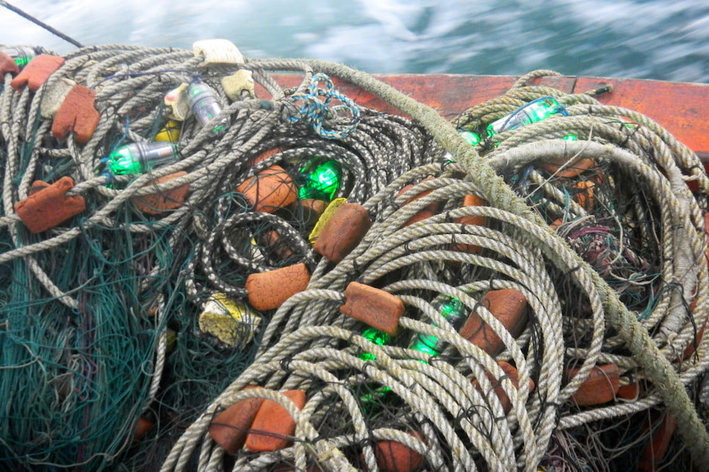 led fishing nets protect turtles these light up with leds to keep from getting caught