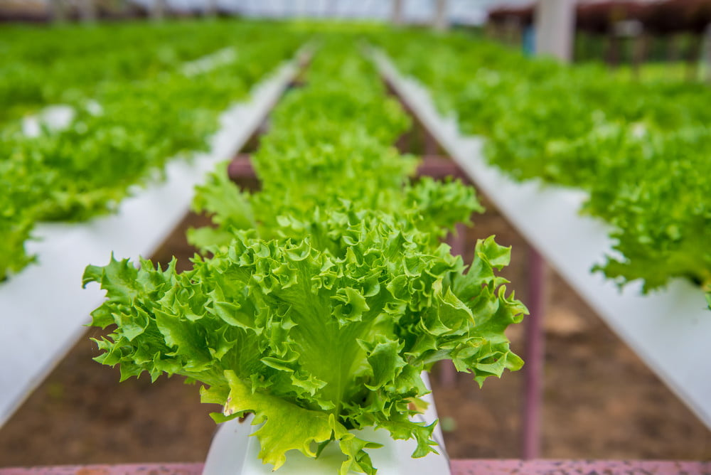Related: LED indoor farms could change the food industry, and help ...